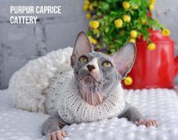 Anny   PurPur Caprice