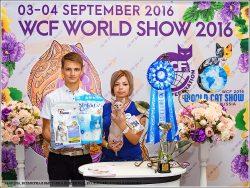 Всемирная выставка кошек 03-04 сентября 2016 г., Ессентуки, EUROPE CONTINENT WORLDSHOW